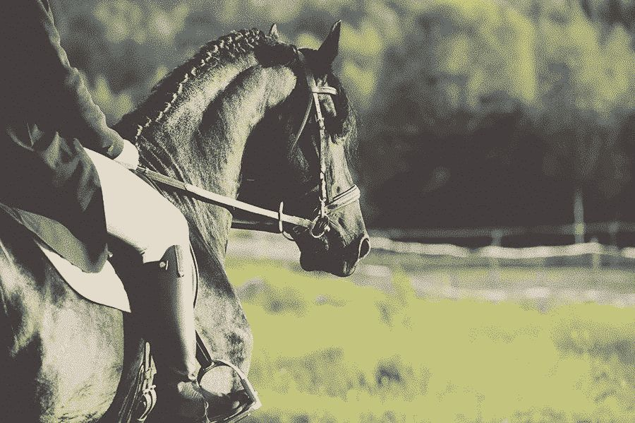 Term Riding