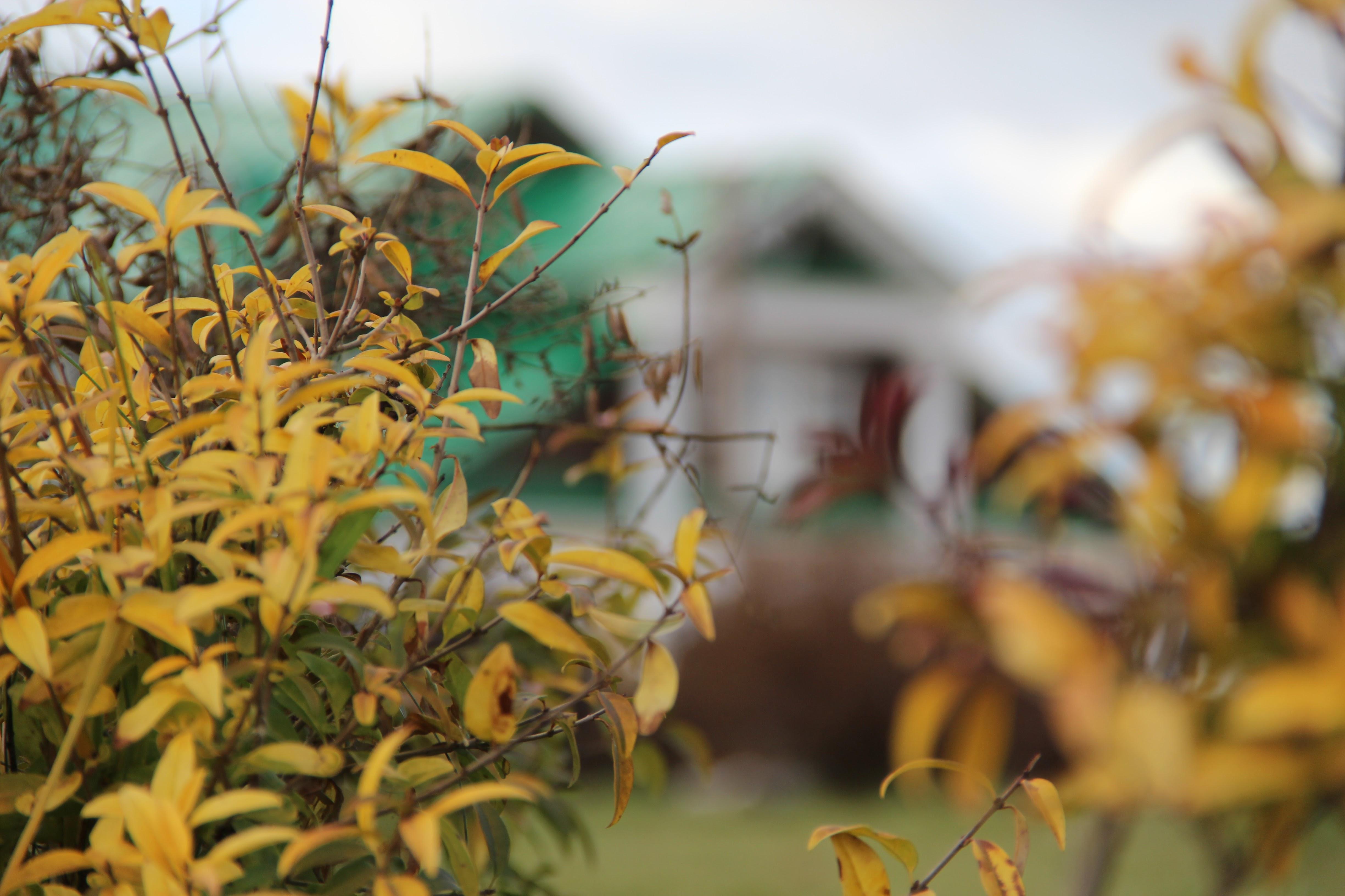 autumn15032