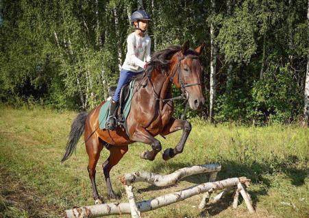 КОНКУРНЫЕ ВЫХОДНЫЕ + полевая езда и прыжки в полях